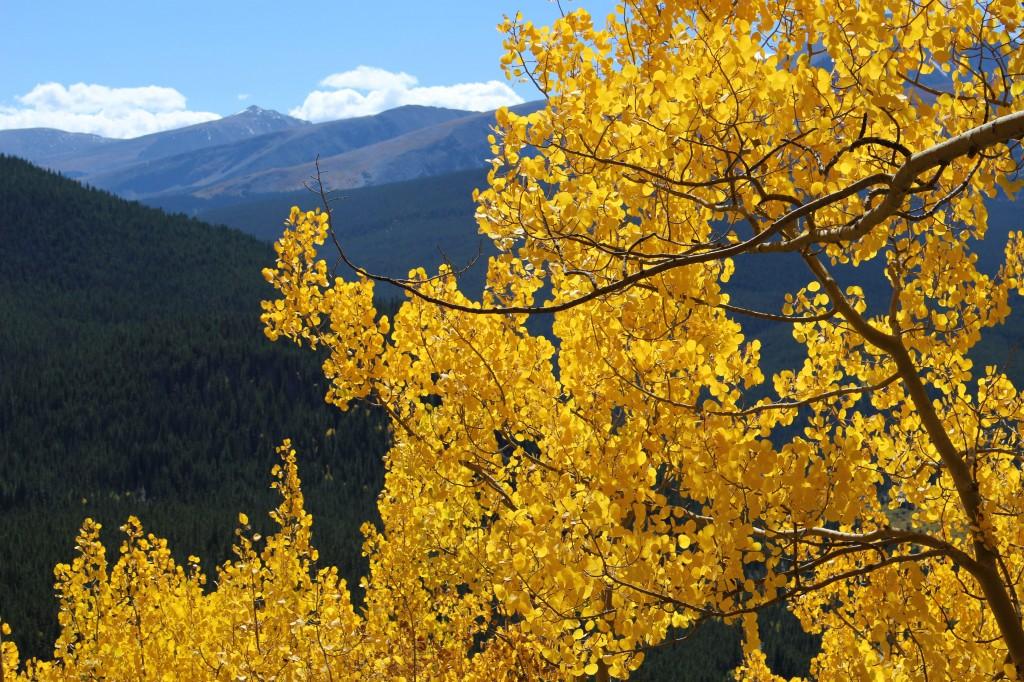 Aspen-Breck