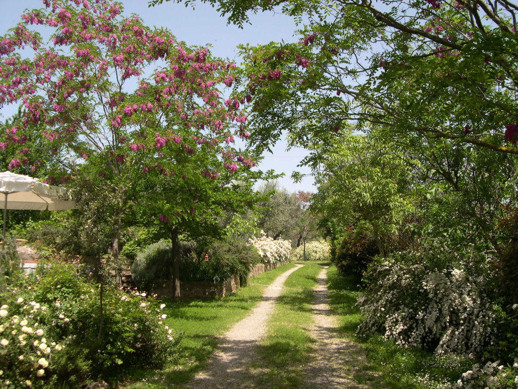 gravel-with-flower-trees