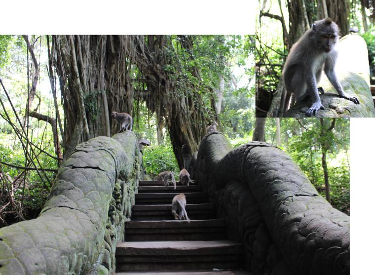Monkeys-on-bridge-x2