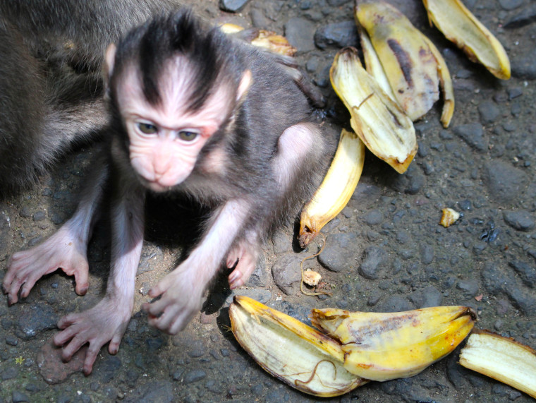 monkey-baby-banana