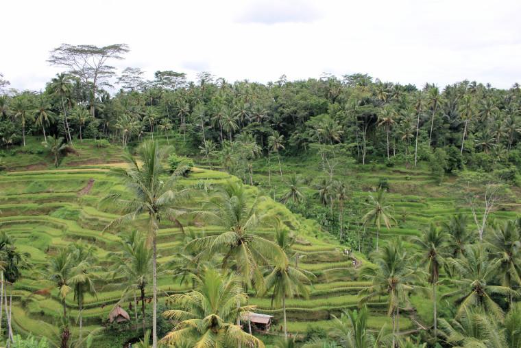 rice-terrace-best