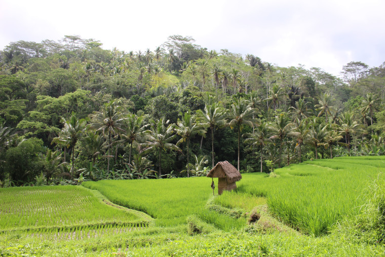 secret-rice-field
