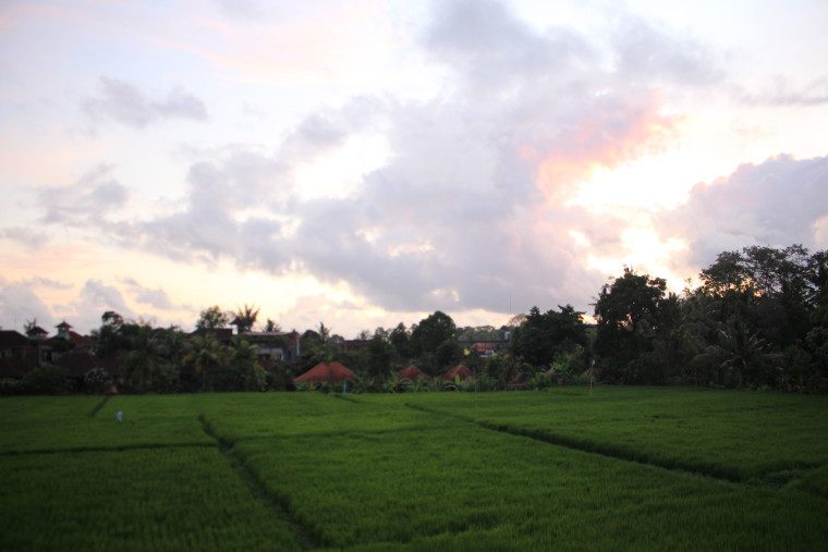 view-from-hotel-ubud